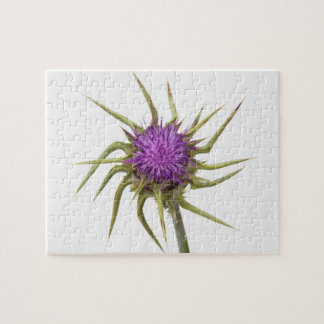Marian thistle 2 jigsaw puzzle