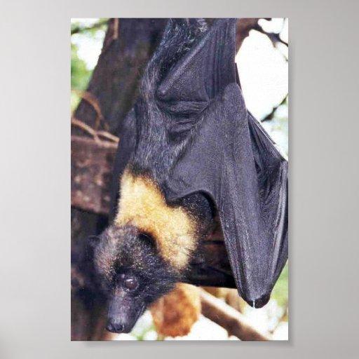 Mariana Fruit Bat Posters