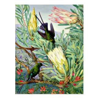 Marianne North - Honeyflowers and Honeysuckers Postcard