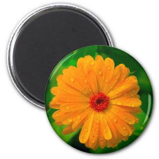 Mariengoldblume 6 Cm Round Magnet