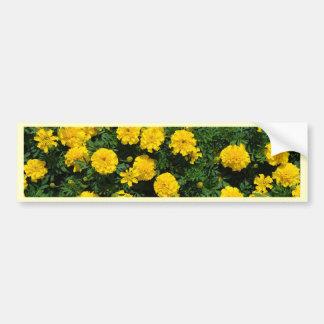 Marigold Bumper Sticker