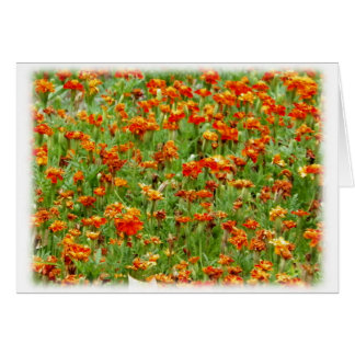 Marigold Flower Blooms Blank Card