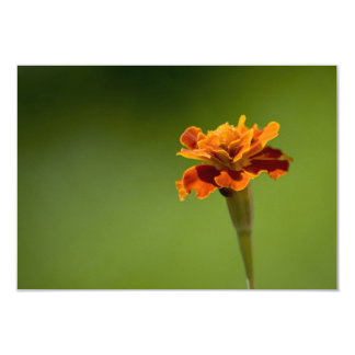 Marigold Flower Closeup 9 Cm X 13 Cm Invitation Card