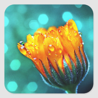 Marigold Flower on Teal Square Sticker