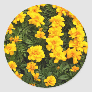 Marigold Flower Stickers