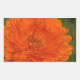 Marigold Rectangular Sticker