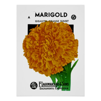 Marigold Vintage Seed Packet Poster