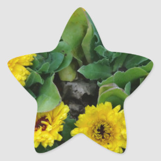 marigolds star sticker