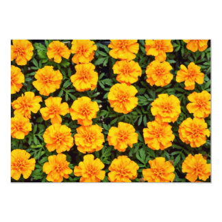 Marigolds Yellow flowers Card