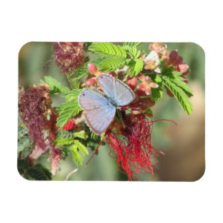 Marine Blue Butterfly Magnet
