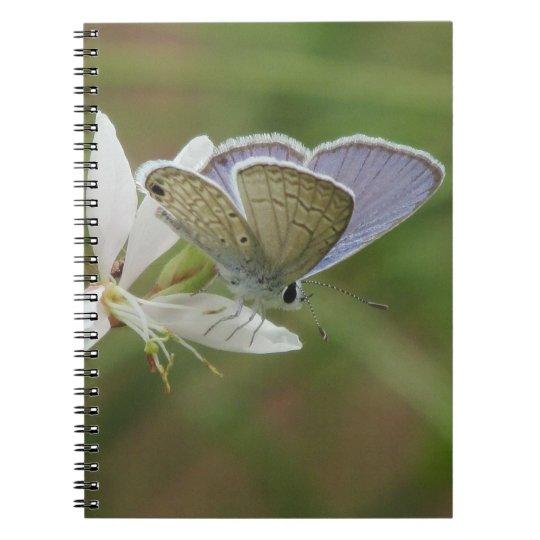 Marine Blue Butterfy on Gaura Bloom Spiral Notebook