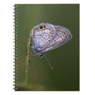 Marine Blue on a green stick Spiral Notebook