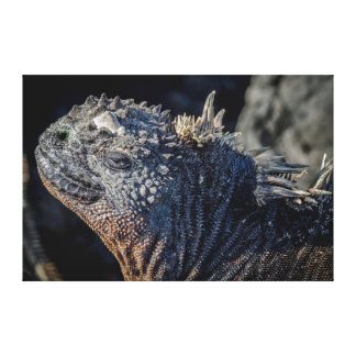 Marine Iguana close-up of head and spines Canvas Print