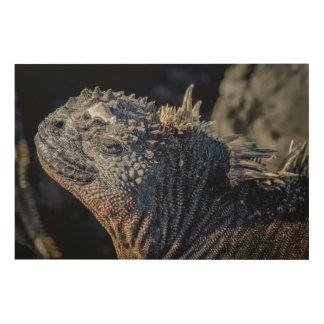 Marine Iguana close-up of head and spines Wood Print