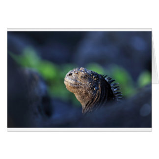 Marine iguana Galapagos Islands Card