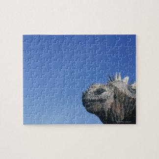 Marine Iguana Jigsaw Puzzle