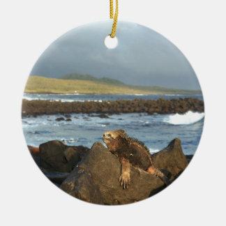 Marine iguana relaxing Galapagos Islands coastline Round Ceramic Decoration