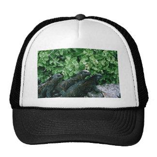 Marine Iguanas Trucker Hat