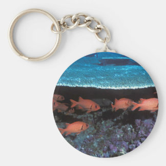 marine keyring featuring soldier fish basic round button key ring