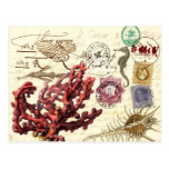 Marine Life Collage with Postmarks and Stamps