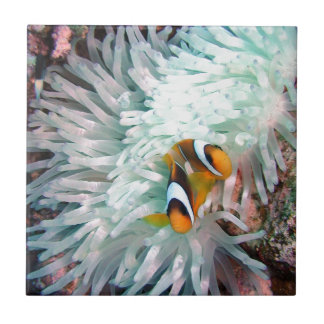 Marine Life Small Square Tile