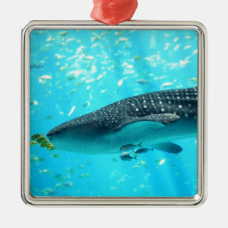 Marine Water Chic Stylish Cool Blue Whale Shark Silver-Colored Square Decoration