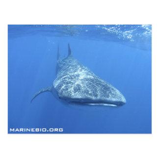 MarineBio Postcard