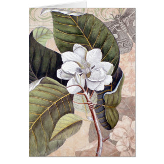 Mark Catesby Magnolia Vintage Elegance Greeting Card