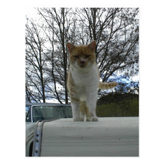 Marmalade Cat Standing On Camper Top Post Cards