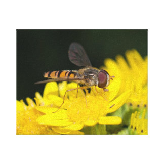 Marmalade Fly Canvas Print
