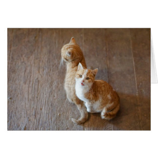 Marmalade kittens sitting pretty card