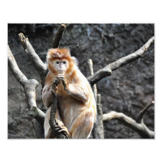 Marmalade Monkeys Art Photo