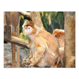 Marmalade Monkeys Photo