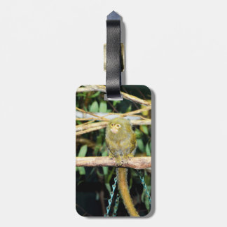Marmoset Monkey Sitting On A Branch, Luggage Tag