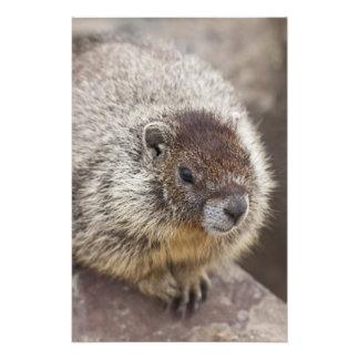 Marmot at Palouse Falls State Park Photo Print