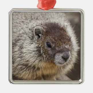 Marmot at Palouse Falls State Park Silver-Colored Square Decoration