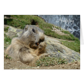 Marmot birthday card