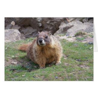 Marmot Cards