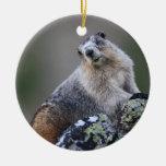 marmot christmas ornament