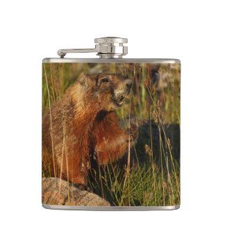 marmot eating grass hip flasks