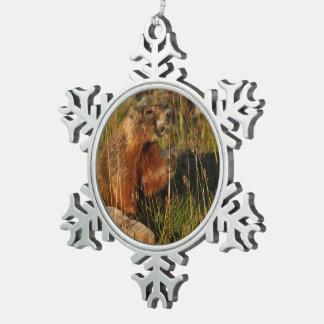 marmot eating grass pewter snowflake decoration