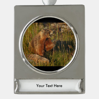 marmot eating grass silver plated banner ornament