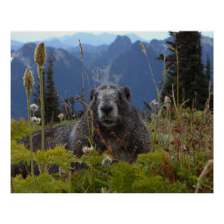 Marmot In Paradise Poster