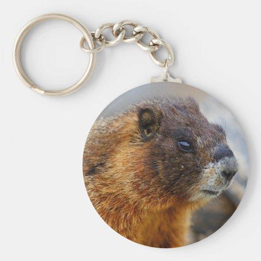 marmot keychains