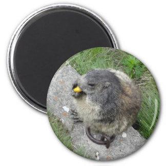 Marmot magnet
