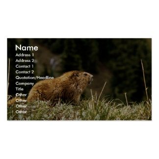 Marmot Pack Of Standard Business Cards