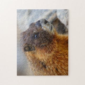 marmot puzzle