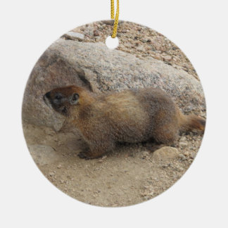 Marmot Round Ceramic Decoration
