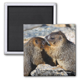Marmot Square Magnet