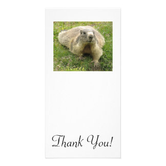 Marmot With Ticked Coloration And Cool Paws Customised Photo Card